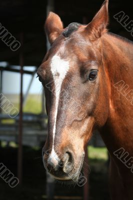 portrait of a young horse with beautiful eyes / ranch