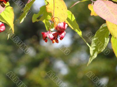 Seeds/fruits on a tree