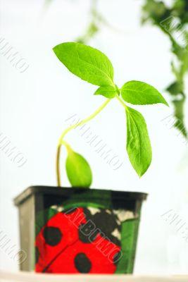 Plant gardening.