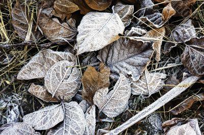 Frozen autumn leaves ashore sea