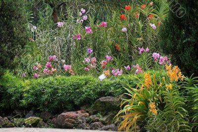 Botanical garden in Singapore