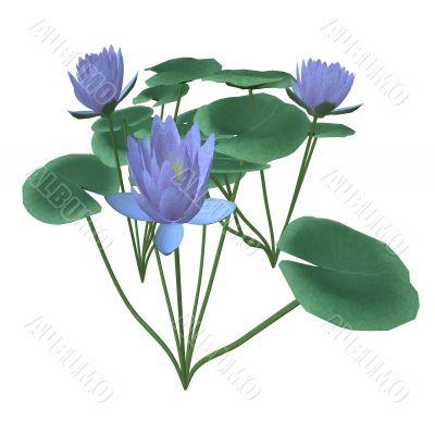 Wild flowers for decorative registration