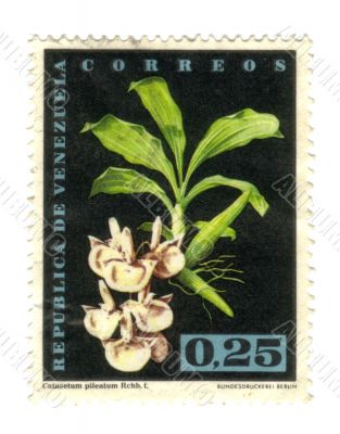 Old stamp from Venezuela with flower