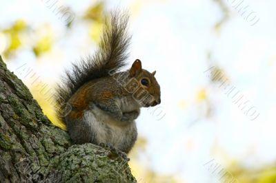 Closeup of a Squirrel