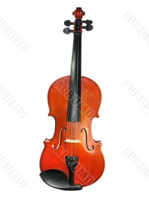 Classic violin isolated on white background