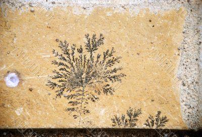 fossil designed stone