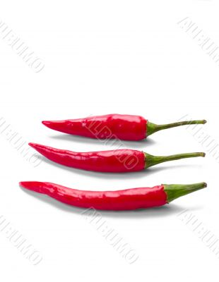 chilly peppers
