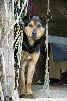 dog beside nets