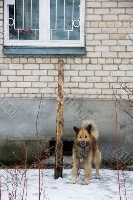 Dog under window