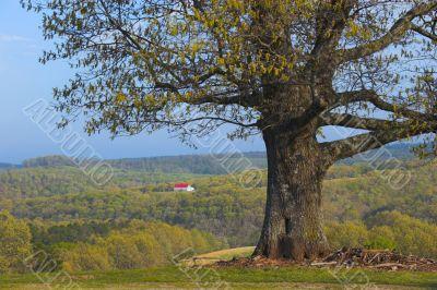 Tree and remote farm