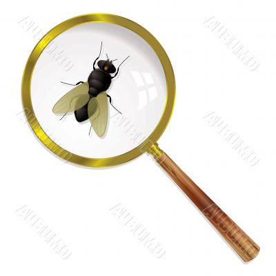 magnify fly