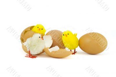 Three Easter chicks