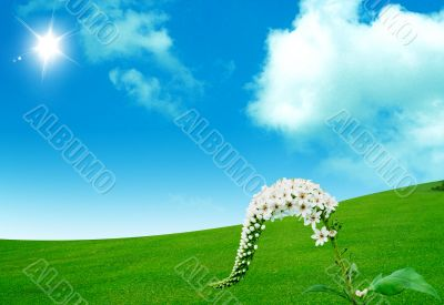 Spring flower  with sky