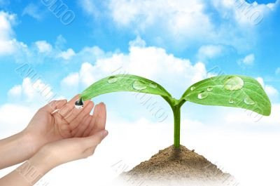 A plant and hands