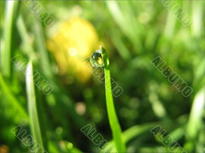 A Drop Of Dew