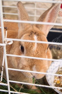 Little cute rabbit eating in a cage