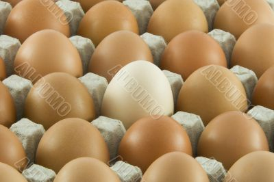 Many fresh rural eggs packed into cardboard container