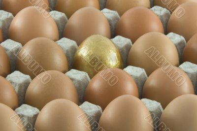 One golden egg with many ordinary fresh rural eggs packed into c