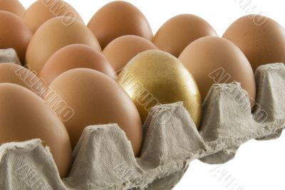 One golden and many ordinary fresh rural eggs packed into cardbo