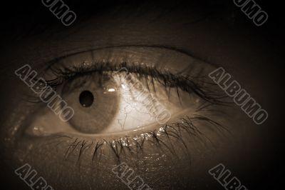 Eyes Hazel sepia