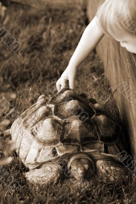 Child touching and feeling a Turtle sepia