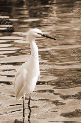 Migratory Crane Bird sepia