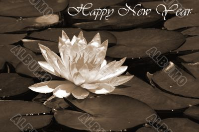 Happy New Year 2008 sepia