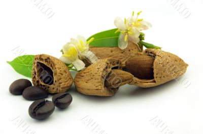 Coffee beans and almond with flowers