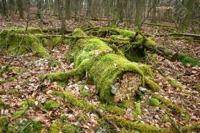 Weathered deadwood