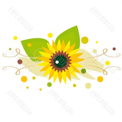 sunflower on spotted background
