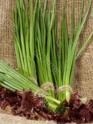 Bunches of the cut off green onions