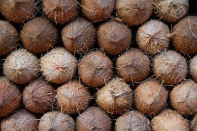 coconut fruit for sale