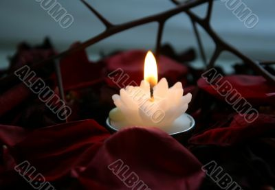 Fire of petals