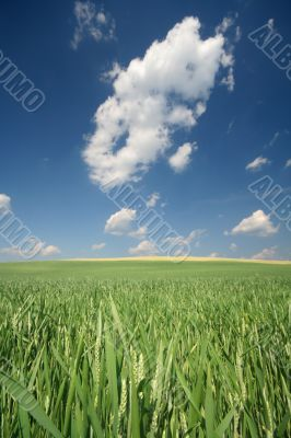 meadow with blue sky