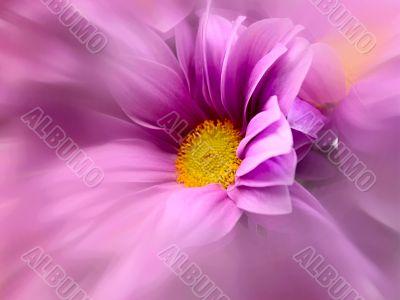 chrysanthemum with radial zoom lens filter