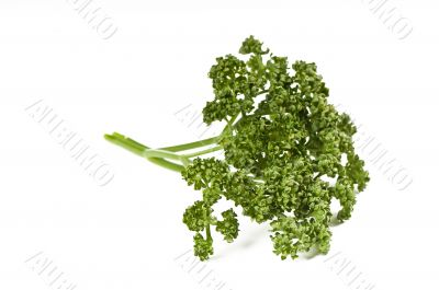 Parsley green leaf closeup on white background