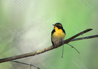 bird sits on a tree branch in wood