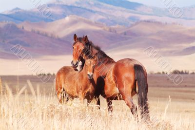 horse with foal in mountain valley