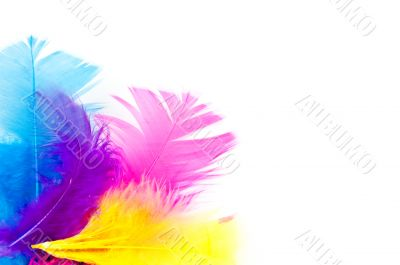 colorfull feathers with copy-space
