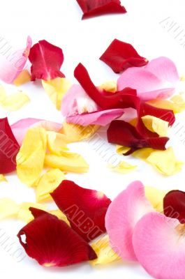 red, pink and yellow rose paddles isolated on white