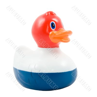 rubber toy duck with dutch flag on is on white background