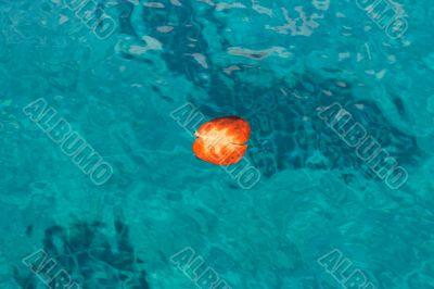 Red autumn leaf floating on sea