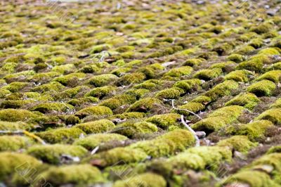 Moss - grown roof Abstract Background