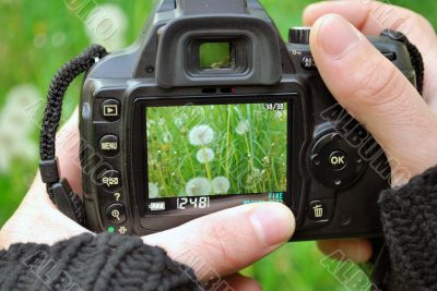 Camera Display With Plants