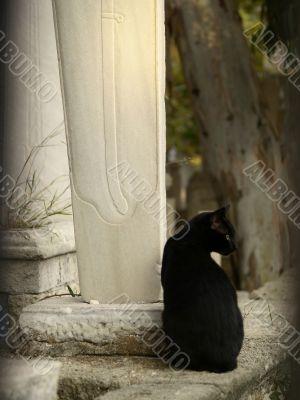Black cat on muslim cemetery