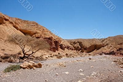 Desert rocky landscape in Red Canyon