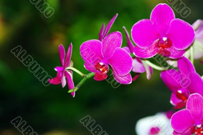 A purple orchid on natural green background