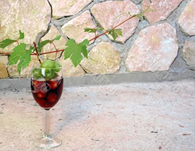 vine shoot over wine glass