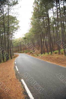 forest with road