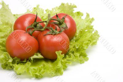 Group red tomato on leaf lettuce.